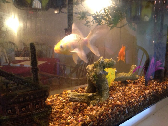 greshville-inn-fish-tank
